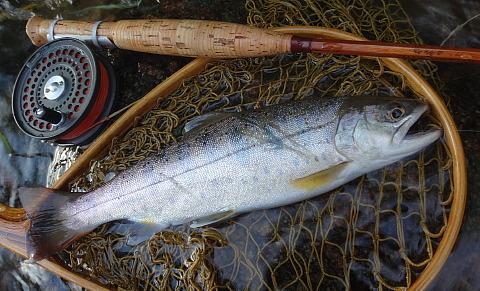 170611 Fishing.jpg