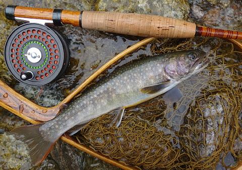 170624 Fishing ~1.jpg
