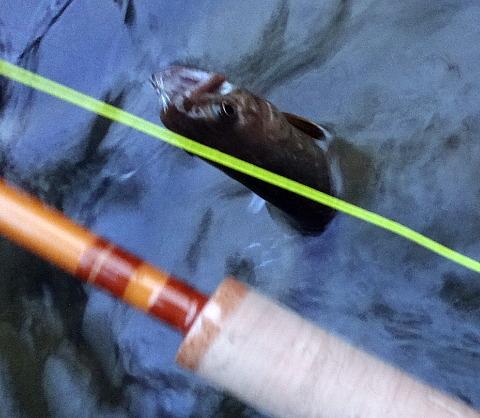 171627 Fishing.jpg