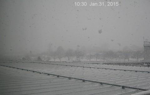 SnowingScene 150131-1030.jpg