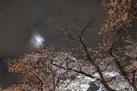 170408 Full-Blossom ~1.jpg